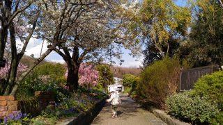 【おでかけ】子連れのお出かけに最適♪春の北山緑化植物園