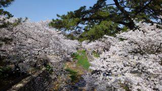 【おでかけ】桜満開!春の子連れ花見ピクニックに♪西宮、宝塚のオススメ公園