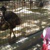 【おでかけ】子どもが喜ぶ動物園(無料!)も♪大型遊具、ハイキングなど1日遊べる五月山公園/大阪府池田市