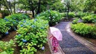 【おでかけ・子育てグッズ】今が見頃♪夙川公園の紫陽花さんぽは、子どもの傘を差す練習にも☆/西宮