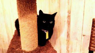 【おでかけ】猫、動物好きの子どもとのおでかけに♪冬の寒い日・雨の日にもぴったり!猫カフェぶぅたん/西宮・鳴尾