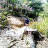 【散歩・ハイキングvs.コロナ】つつじが見頃の春の北山、3才くらいからハイキングできます!※植物園は休園中/西宮
